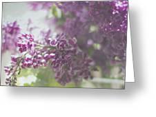 Lalac Bokeh Greeting Card by Rebecca Cozart