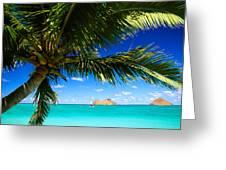 Lanikai, Palm Tree Greeting Card by Dana Edmunds - Printscapes