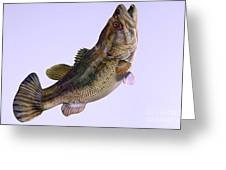 Largemouth Bass Side Profile Greeting Card by Corey Ford