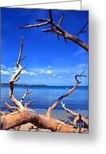 Las Cabezas Bay Greeting Card by Thomas R Fletcher