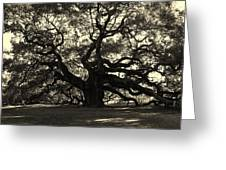 Last Angel Oak 72 Greeting Card by Susanne Van Hulst