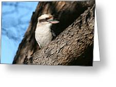 Laughing Kookaburra Greeting Card by Tony Brown