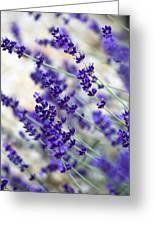 Lavender Blue Greeting Card by Frank Tschakert