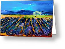 Lavender field Greeting Card by Elise Palmigiani