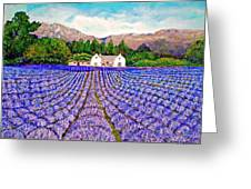 Lavender Fields Greeting Card by Michael Durst