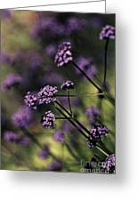 Lavender Garden I Greeting Card by Jayne Logan Intveld