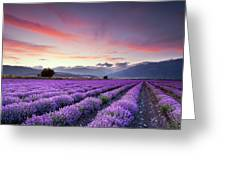 Lavender Season Greeting Card by Evgeni Dinev