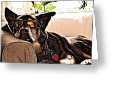 Lazy Dog Greeting Card by Jim DeLillo
