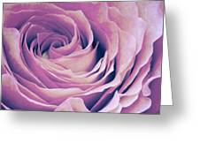 Le Petale De Rose Pourpre Greeting Card by Angela Doelling AD DESIGN Photo and PhotoArt