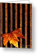 Leaf In Drain Greeting Card by Carlos Caetano