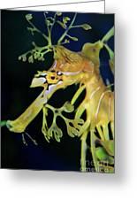 Leafy Sea Dragon Greeting Card by Mariola Bitner