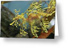 Leafy Sea Dragon Greeting Card by Yue Chen