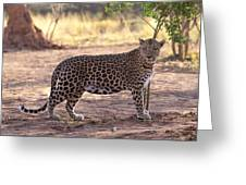 Leopard Greeting Card by Keith Levit