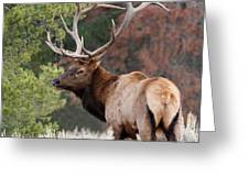 Let The Rut Begin Greeting Card by Sandra Bronstein