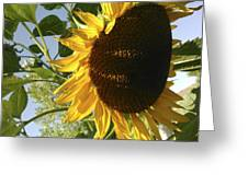 Life Is Good Greeting Card by Jane Autry