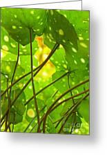 Ligularia Tussilaginea Greeting Card by Carlos Caetano