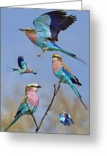 Lilac-breasted Roller Collage Greeting Card by Basie Van Zyl