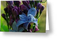 Lilac Greeting Card by Juergen Roth