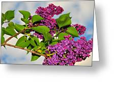 Lilacs Greeting Card by Catherine Reusch  Daley