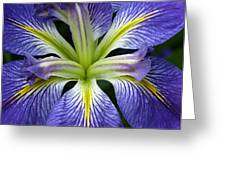 Lilied Greeting Card by Vari Buendia