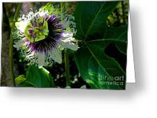 Lilikoi Greeting Card by James Temple