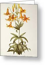 Lilium Penduliflorum Greeting Card by Pierre Joseph Redoute