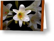 Lily Greeting Card by Ben and Raisa Gertsberg