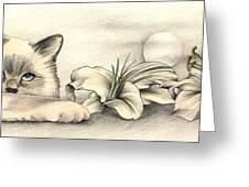Lily The Birman Greeting Card by Johanna Pieterman
