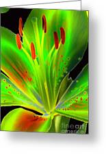 Lime Twist Greeting Card by Diane E Berry