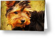 Little dog II Greeting Card by Angela Doelling AD DESIGN Photo and PhotoArt