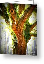 Live Oak With Cypress Beyond Greeting Card by Carol Groenen