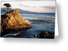 Lone Cypress Tree Greeting Card by Michael Howell - Printscapes