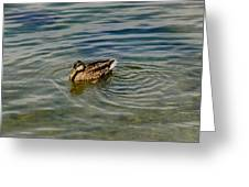 Lone Duck Swimming On A River Greeting Card by Todd Gipstein
