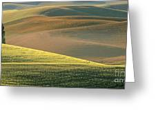 Lone Tree In The Palouse  Greeting Card by Sandra Bronstein