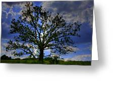 Lonely Tree Greeting Card by Kevin Hill