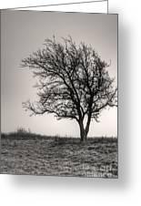 Lonesome Tree Greeting Card by Tamyra Ayles