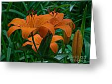 Long Valley Lily Greeting Card by Robert Pilkington