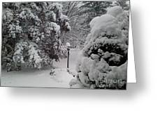 Looking Out My Front Door Greeting Card by Carol Wisniewski