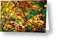 Lost In Leaves Greeting Card by Kathy McClure