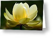 Lotus Blossom Greeting Card by Christopher Holmes