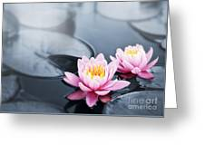 Lotus Blossoms Greeting Card by Elena Elisseeva