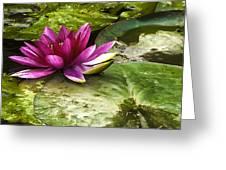 Lotus Greeting Card by Svetlana Sewell