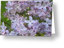 Lovely Lilacs Greeting Card by Anna Villarreal Garbis