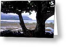 Low Tide And The Tree Greeting Card by Kathy Yates