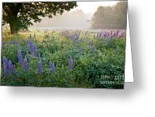 Lupine Field Greeting Card by Susan Cole Kelly