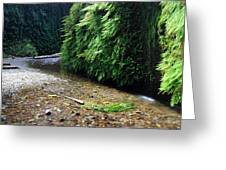 Lush Fern Canyon Greeting Card by Pierre Leclerc Photography