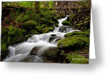 Lush Stream Greeting Card by Mike Reid