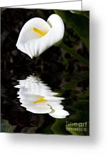 Madonna Lily Reflection Greeting Card by Sheila Smart