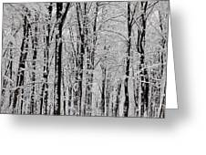 Magic Forest Greeting Card by Gabriela Insuratelu