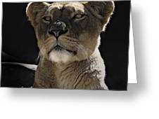 Magnificent Lioness Greeting Card by Sheila Smart